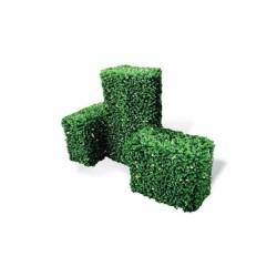 Siepe Sempreverde Bosso Cm 55x30x55
